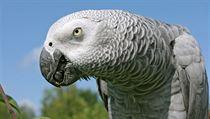 Papoušci jsou chytří jako opice b4486ae155