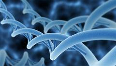 Čeští vědci připravili databázi vzorků DNA starých až 30 tisíc let