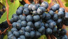 Rozšířením vlastní vinice začal v Krumlově Festival vína