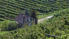 Vinařům krize nevadí. Češi si našli cestu do vinoték