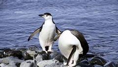 U Antarktidy vznikne největší přírodní rezervace světa