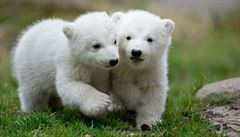 Pražská zoo vypíše soutěž na návrh pavilonů pand a ledních medvědů