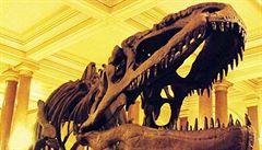 Vědci poprvé identifikovali zkamenělinu mozku dinosaura
