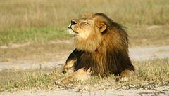 Zimbabwe chce soudit zubaře, který zastřelil lva Cecila. Bardottová žádá exemplární trest