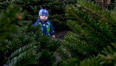 Pražané mohou koupit vánoční stromek při procházce přímo z lesa