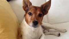 Domažlice chtějí vyhlášku o povinném čipování psů