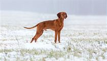 8dc4aa9aec4 Jak pečovat o zvířecí mazlíčky v zimě  Pozor na led