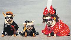 Zimní svetřík i brýle. Módní návrháři oblékají hlavně psy