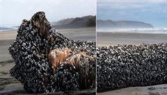 Moře na Novém Zélandu vyplavilo mysteriózní obří objekt