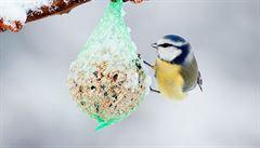 V mrazu oprašte krmítka a přikrmujte ptáky, vyzývají ornitologové
