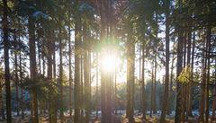 Lesy ČR chtějí koupit rumunské hvozdy za 1,5 miliardy. Expanze může být i větší