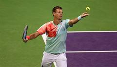 Berdych si v Rotterdamu poradil s Gasquetem, také Plíšková v Dauhá ve čtvrtfinále