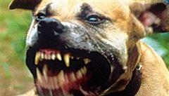 Psi vtrhli do chomutovského zooparku a napadli soby