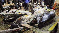 Na novoroční aukci v Tokiu se prodal tuňák za 16,3 milionu Kč
