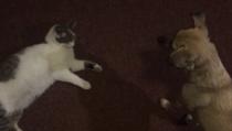 1a64df21960 Pojď si hrát. Pes a kočka jako nejlepší kamarádi