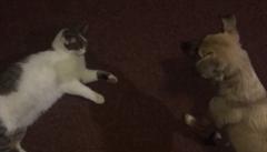 Pojď si hrát. Pes a kočka jako nejlepší kamarádi