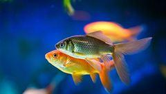 Zeptali jsem se vědců: Mohou ryby nějak vyjadřovat emoce?