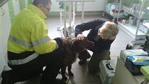 Zvíře se nyní nachází na stanici Petra Prokeše.