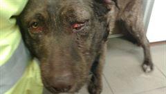 Týral psy a kočku a nesouhlasil s jejich odebráním. Agresivní muž napadl policisty