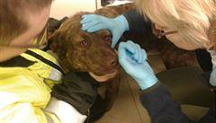 Smrt psa v Kroměříži vyšetřuje policie jako týrání zvířat, o pomoc žádá veřejnost