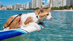 Jednooká kočka se naučila surfovat se svými majiteli