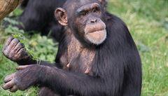 Opice vydělá na burze víc než expert. Zkuste to i vy