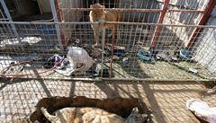 Zbyli jen lev s medvědem. Zvířata v mosulské zoo nepřežila dlouhou ofenzivu