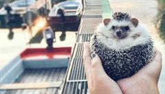 Ježek, liška i surfující kočka. 5 zvířecích hvězd Instagramu