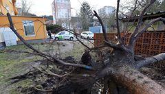 Silný vítr v Česku způsobil škody v řádu desítek milionů korun, hlásí pojišťovny