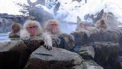 Japonská zoo utratila 57 makaků. Měli v sobě geny invazivních druhů opic