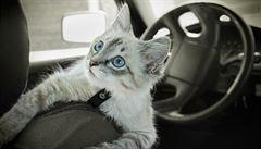 Život na cestách s kočkami a psy