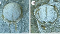 Vědci v Česku objevili gigantické larvy trilobitů, které obývaly moře jižní polokoule