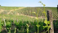 Moravští vinaři bodovali ve Francii. Vyhráli ve střihu vinné révy