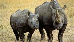 Speciálně vycvičení psi budou v JAR chránit nosorožce před pytláky