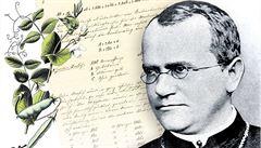 Mendelovo zakladatelské dílo genetiky bylo nejméně rok mimo Česko. Jednalo se o repatriaci