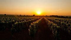 Víno není alkohol, ale potravina. Moldavci pomáhají vinařům proti ruským sankcím