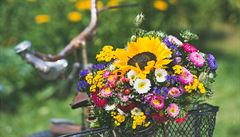 Luční kvítí je dražší než růže a zboží z Afriky. V Česku skoro není k sehnání