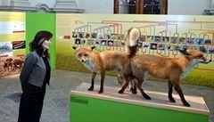 Milování v přírodě. Olomoucké muzeum otevřelo výstavu o intimním životě zvířat