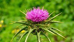 Olomoučtí vědci vyšlechtili nové odrůdy, pomohou při nemoci jater
