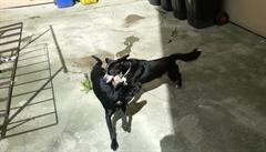 Dovádění psích kamarádů na dvorku