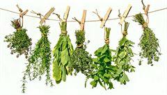 Rozmarýn i citronová tráva. Jaké bylinky vypěstujete doma za oknem?