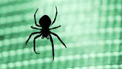 Zeptali jsme se vědců: Jak přezimují pavouci?