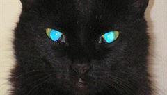 Zeptali jsme se vědců: Proč má kočka na fotkách s bleskem tyrkysové oči?