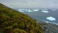 Klimatické změny mění ráz Antarktidy. Začíná se zelenat, tvrdí vědci