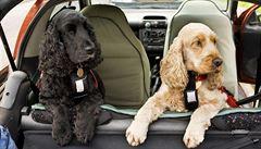 Cestování se zvířecími mazlíčky. Za jízdy psa nikdy nekrmte