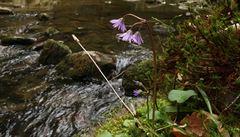 V Krkonoších někdo zahradil potok, kvůli nedostatku vody uhynulo osm vzácných mihulí