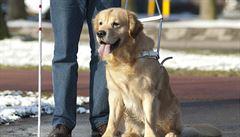 Kampaň chce státní příspěvky i na asistenční psy pro postižené