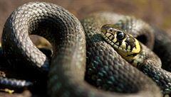 Pevnost poznání obsadí o víkendu hadi a obojživelníci