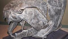Zeptali jsme se vědců: Jak vznikla v evoluci lebka?
