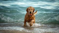 Praktické rady na léto? Psa nikdy neházejte do vody, mohl by se utopit